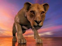 L'immagine di una leonessa Immagine Stock