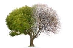 L'immagine mista dell'albero del collage consiste della parità accoppiamento dell'inverno e dell'estate Fotografie Stock Libere da Diritti