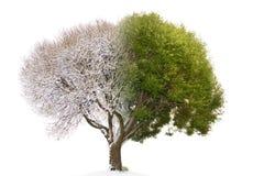 L'immagine mista dell'albero del collage consiste della parità accoppiamento dell'inverno e dell'estate Immagine Stock Libera da Diritti