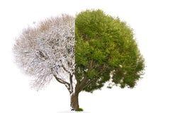 L'immagine mista dell'albero del collage consiste della parità accoppiamento dell'inverno e dell'estate Fotografia Stock