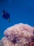 L'immersione con bombole Immagini Stock