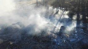 L'immondizia nella foresta fuma dopo un fuoco video d archivio