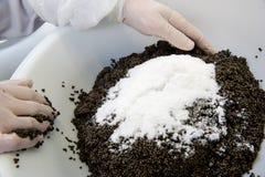 L'impianto di lavorazione del caviale, storione di miscelazione del lavoratore eggs con sale i Immagine Stock
