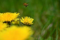 l'importance des abeilles image stock