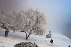 L'impression de l'hiver Photo stock