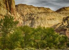 L'incandescenza di roccia rossa sui pioppi Fotografia Stock