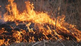 L'incendie de flambage détruit l'herbe sèche clips vidéos
