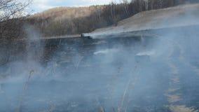 L'incendie de forêt brûle fleurs de foin d'herbe sèche de petites endommageant les animaux, la flore et la faune banque de vidéos
