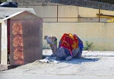 l'Inde Chameau sur une rue de ville image stock