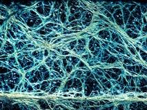 L'indennità incredibile della pianta vascolare pianta assomigliare ad una rete neurale immagini stock