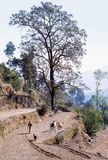 1977 L'India Aratro tirato dai buoi Fotografie Stock Libere da Diritti