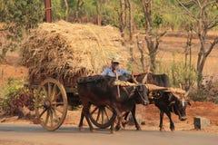 L'India felice Fotografie Stock