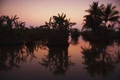 L'India - Goa - piantagione della banana Fotografie Stock Libere da Diritti