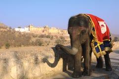 L'India, Jaipur: un elefante Fotografie Stock