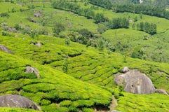 L'India, Kerala fotografia stock