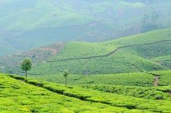 L'India, Kerala, piantagione di tè Fotografia Stock