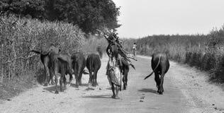 L'India rurale Fotografia Stock Libera da Diritti