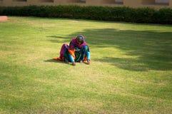 L'indiano femminile falcia il prato inglese della mano con erba verde Duro lavoro della gente povera in India Immagini Stock