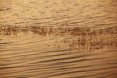 L'indicatore luminoso del tramonto ha riflesso sull'acqua del lago Fotografia Stock Libera da Diritti
