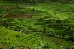 l'indonésie Images libres de droits