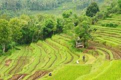 l'Indonésie, Bali, terrasses de riz Photographie stock libre de droits