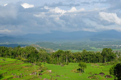l'Indonésie, Sulawesi, Tana Toraja, terrasses de riz Photo stock