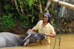 L'Indonesia - coltura tribale tradizionale di Tana Toraja fotografia stock