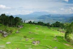 L'Indonesia, Sulawesi, Tana Toraja Fotografia Stock Libera da Diritti