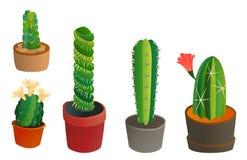 L'industrie mexicaine graphique de jardin de succulent et de plante tropicale de style de cactus de nature de désert de fleur de  Photos stock