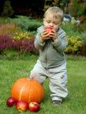 L'infante del bambino sta mangiando la mela Immagine Stock