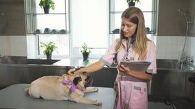L'infermiere sta facendo le note dopo avere cheking sul cane del carlino stock footage