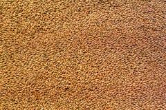 L'ingrediente del malto della birra nella cottura e nella produzione della bevanda dà un colore ambrato e un gusto piacevole fotografie stock