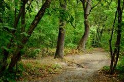 L'inizio dell'autunno Fotografia Stock