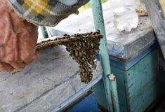 L'inizio della sciamatura delle api Un piccolo sciame delle api affascinate sulla carta del cartone apiary Immagini Stock Libere da Diritti