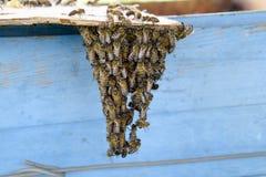 L'inizio della sciamatura delle api Un piccolo sciame delle api affascinate sulla carta del cartone apiary Fotografie Stock Libere da Diritti