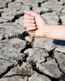 L'inizio della vita nel deserto Immagini Stock Libere da Diritti