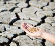 L'inizio della vita nel deserto Fotografia Stock Libera da Diritti