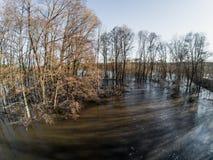 L'inondazione dell'acqua alta o di alta marea o della molla, fiume ha uscito dalla riva, alberi in acqua, mutamento climatico Fotografia Stock Libera da Diritti