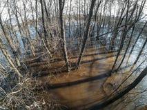 L'inondazione dell'acqua alta o di alta marea o della molla, fiume ha uscito dalla riva, alberi in acqua, mutamento climatico immagine stock