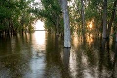 L'inondazione dell'alta marea assume la direzione di una foresta Immagini Stock
