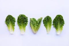L'insalata della lattuga romana va su bianco fotografia stock