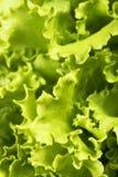 L'insalata lascia la priorità bassa Fotografia Stock