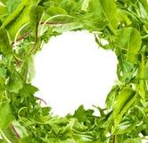 L'insalata lascia la struttura su fondo bianco fotografia stock libera da diritti