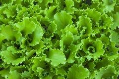 L'insalata verde lascia il fondo immagine stock