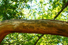L'inscription sur l'arbre Photographie stock libre de droits