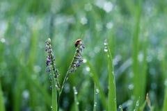 L'insecte photo libre de droits