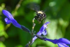L'insecte image libre de droits