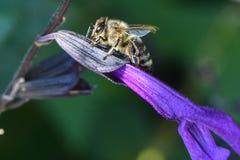 L'insecte photographie stock libre de droits