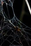 L'insecte lui a été enveloppé en soie d'effrayer effrayant d'araignée Image libre de droits