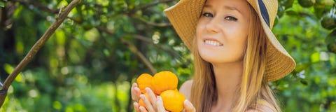 L'INSEGNA, ritratto LUNGO di FORMATO dell'agricoltore attraente Woman è raccogliere arancio in azienda agricola organica, ragazza immagini stock libere da diritti